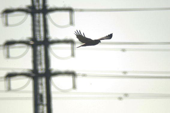 20120108bird002_7